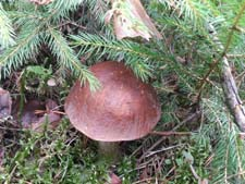 Стихи про грибы детям