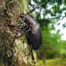 Стихи о жуке