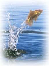 Стихи про рыбку