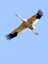 Фразеологизмы о птицах
