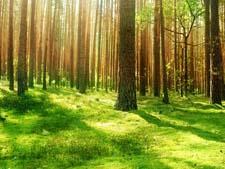 Стихи про утренний лес