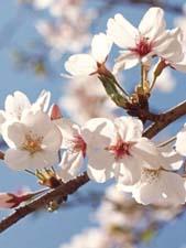 Стихи о весне и любви