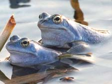"""Отзыв о рассказе В.Бианки """"Голубые лягушки"""""""