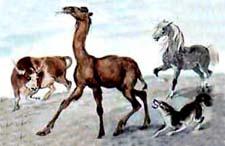 """Отзыв о сказке Р.Киплинга """"Отчего у верблюда горб"""""""
