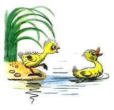 Отзыв о сказке Сутеева «Цыпленок и утенок»